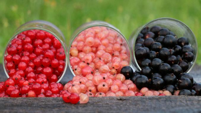 cnosfap veneto linee guida corretta alimentazione scolastica