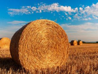 CNOSFAP veneto enti accreditati formazione continua possono presentare progetti formativi per lo sviluppo rurale in Veneto